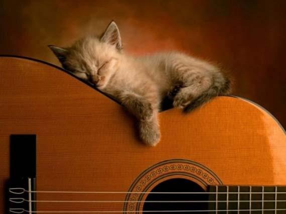 Sleeping cat 1