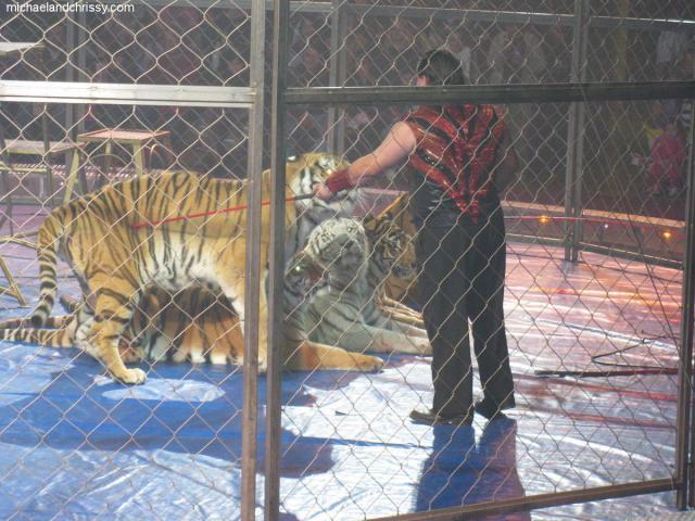 Student tiger tamer img_9332