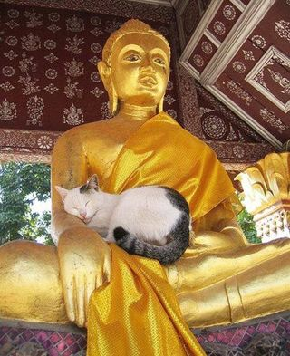 Cat sleeping on Buddha