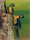 Rp_parrots